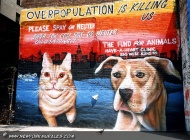 A murales to warn about the overpopulation of cats and dogs | Overpopulation | New York Murales